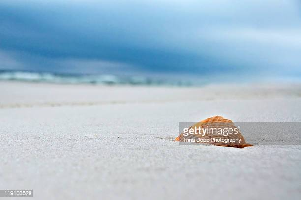 scallop seashell on white sands - pensacola beach stock pictures, royalty-free photos & images