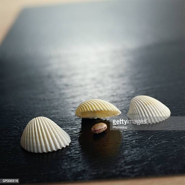 Scallop Shells Lined Up for a Seashell Game
