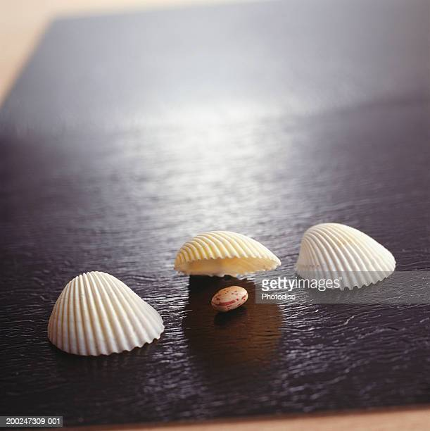 Scallop shells lined up on desk, one shell lifted to reveal bean