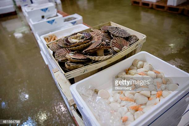 Scallops and other shellfish sit in crates in the seafood and fresh fish area of Rungis wholesale food market in Rungis France on Thursday Jan 15...