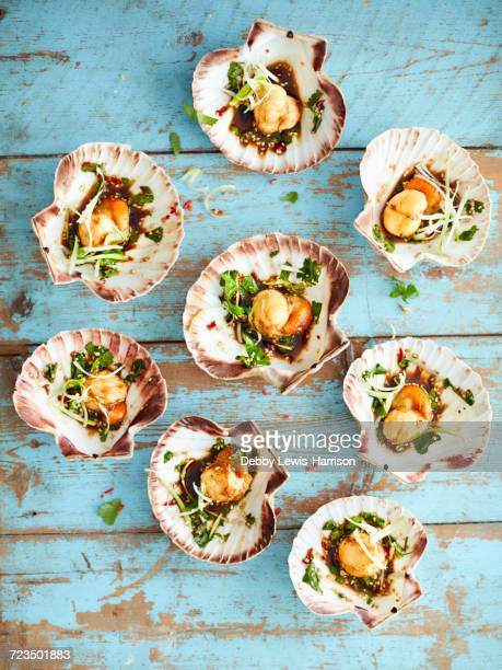 scallops with shells starter - seafood stock pictures, royalty-free photos & images