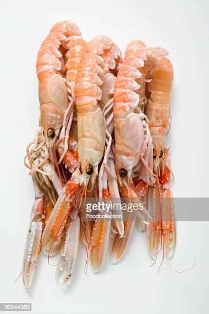 Scampi on white background, close up
