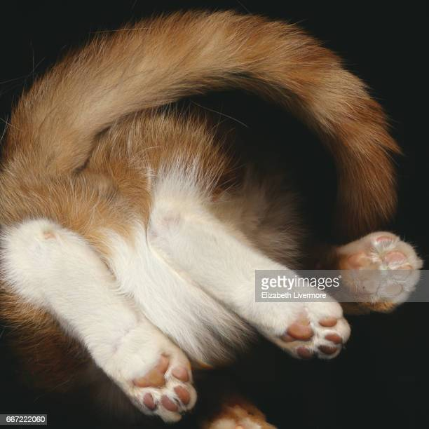 Scan image of a ginger cat