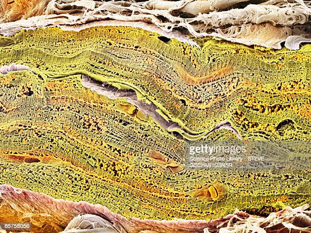 scanning electron micrograph (sem) of mitochondrion - sem stock pictures, royalty-free photos & images