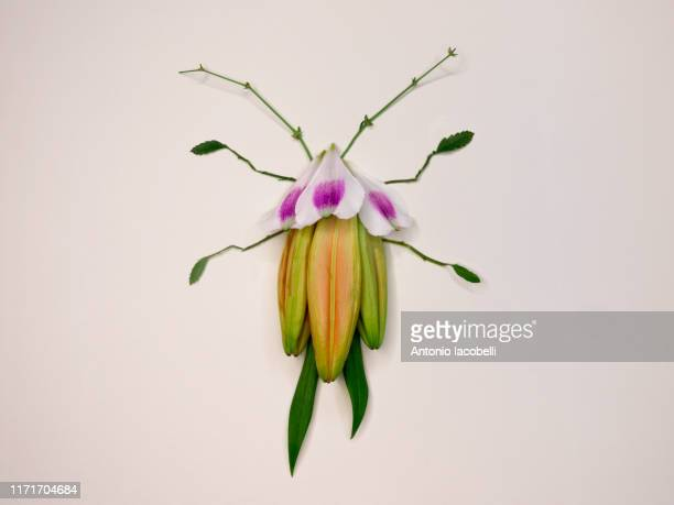 scarab - arthropod stock pictures, royalty-free photos & images