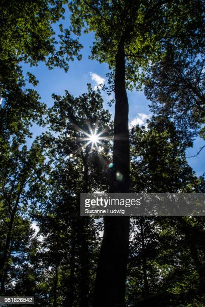 scarce sun - susanne ludwig stock pictures, royalty-free photos & images