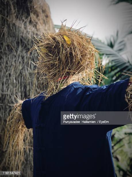 scarecrow at farm - scarecrow agricultural equipment stock photos and pictures