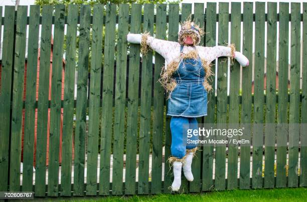 Scarecrow Hanging On Wooden Fence