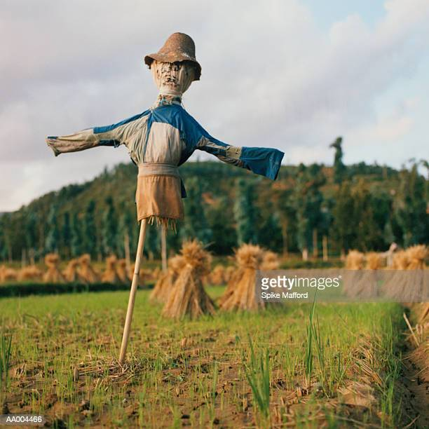 Scarecrow in a Field in Dali, China