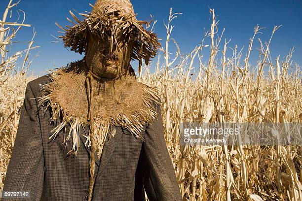a scarecrow in a field - scarecrow agricultural equipment stock photos and pictures