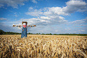 Scarecrow in a Wheatfield
