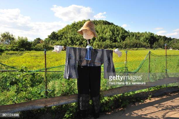 a scarecrow in autumn rice paddy in nara prefecture in japan - scarecrow agricultural equipment stock photos and pictures
