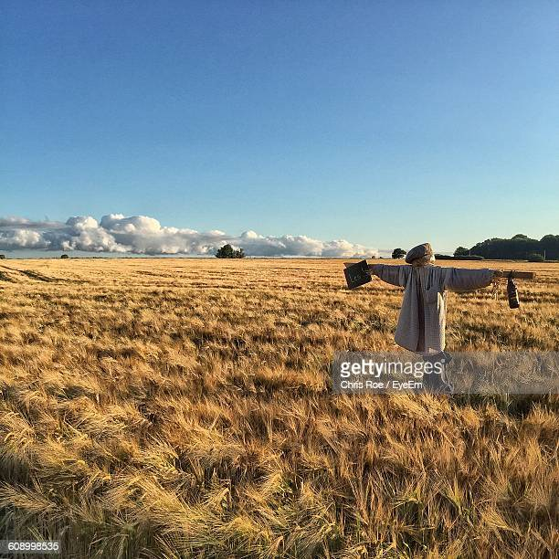 scarecrow in field against clear blue sky on sunny day - scarecrow agricultural equipment stock photos and pictures
