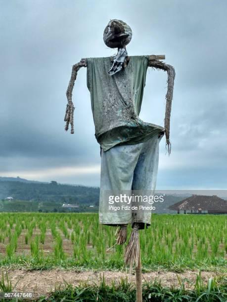 A scarecrow in Jatiluwih rice terrace - Jatiluwih - Bali- Indonesia
