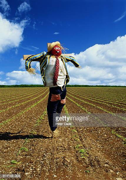 Scarecrow in middle of field of maize shoots, close-up