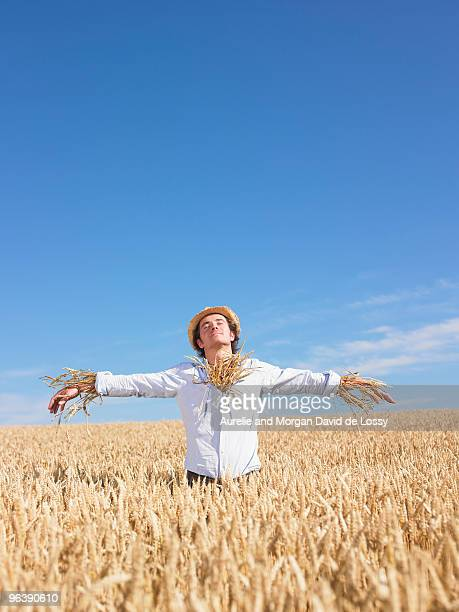 scarecrow in wheat field - scarecrow agricultural equipment stock photos and pictures