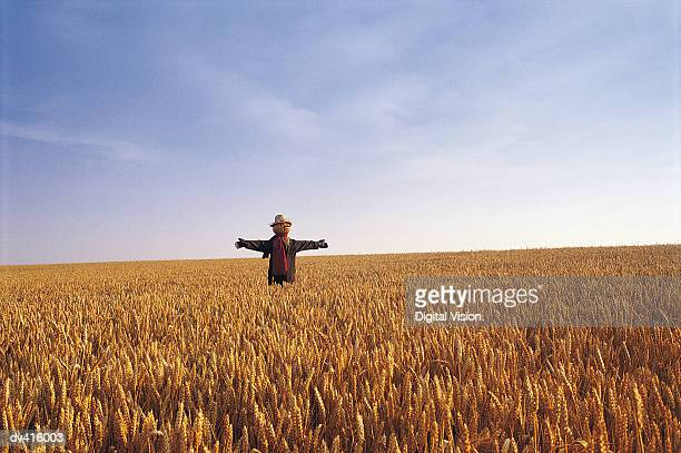 Scarecrow in Wheatfield