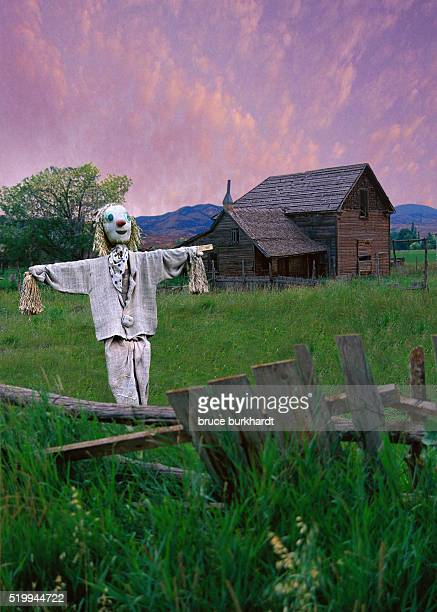 Scarecrow on Rustic Farm