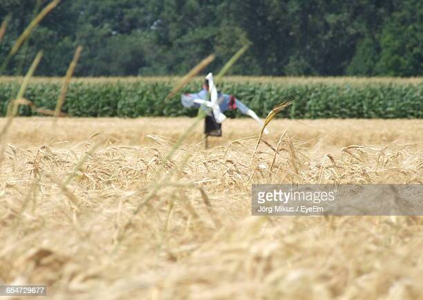 Scarecrow On Wheat Field