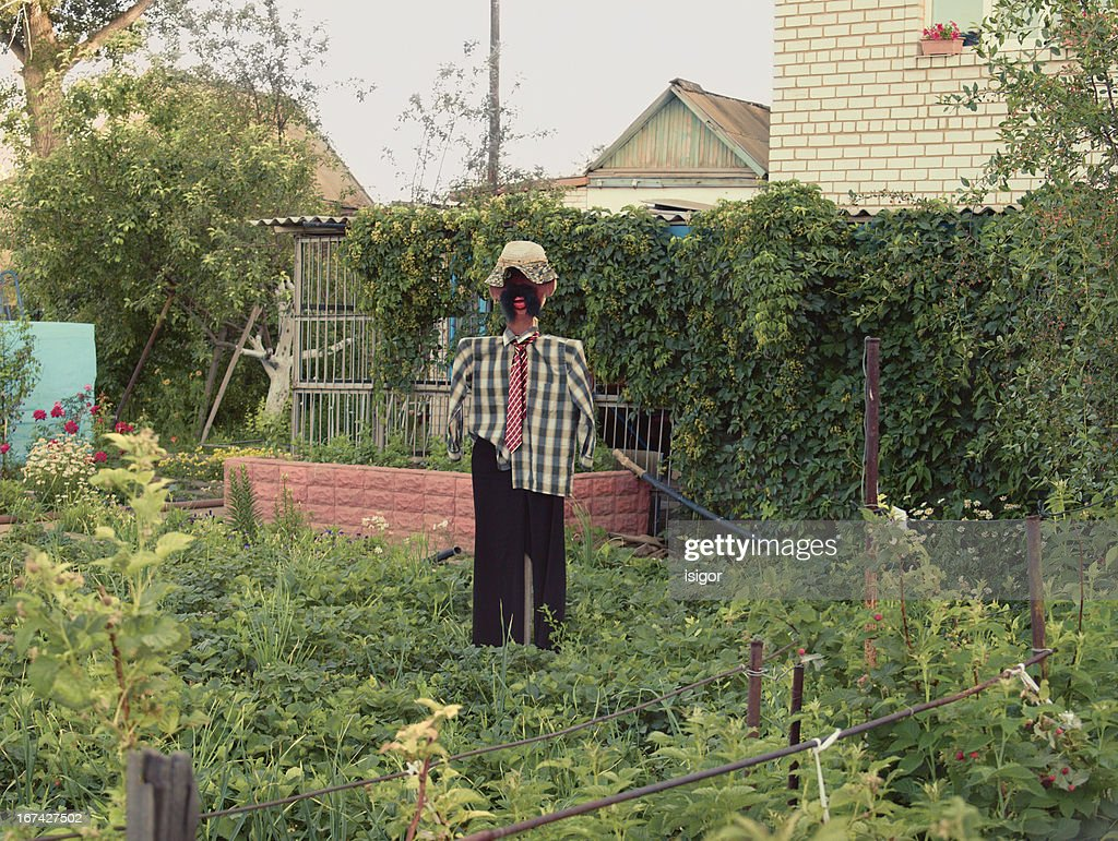 Scarecrow : Stock Photo