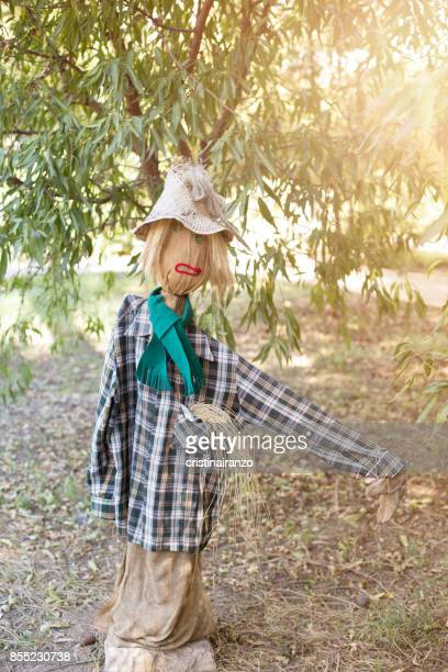 scarecrow - scarecrow agricultural equipment stock photos and pictures