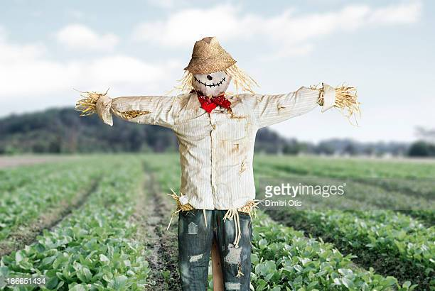 Scarecrow protecting vegetable farm crop
