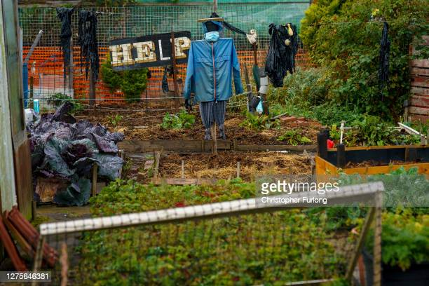 Scarecrow wears a face mask on allotment plot on September 20, 2020 in Sunderland, United Kingdom. Since easing its first nationwide lockdown in May,...