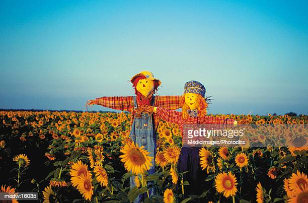 Scarecrows in a field of sunflowers in Kansas, USA