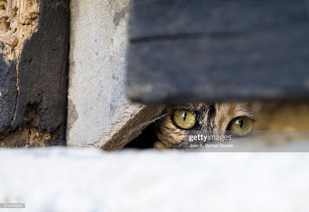 Scared Cat Looking Out The Hole Of A Door : Stock Photo