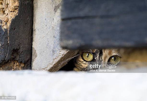 Scared cat looking out the hole of a door