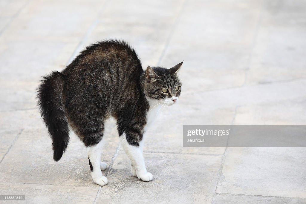 Scared cat : Stock Photo