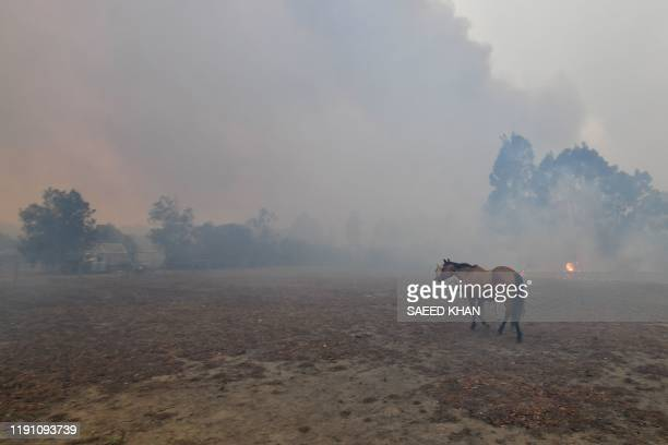 Scared horses try to move away from nearby bushfires at a residential property near the town of Nowra in the Australian state of New South Wales on...