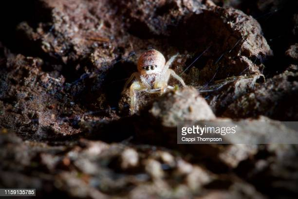 scared looking spider outside on wood - magnification stock pictures, royalty-free photos & images