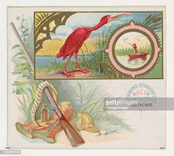 Scarlet Ibis, from the Game Birds series for Allen & Ginter Cigarettes, 1888-90. Artist Allen & Ginter.