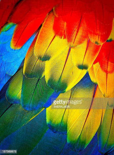 scarlett macaw feathers - parrot stock pictures, royalty-free photos & images