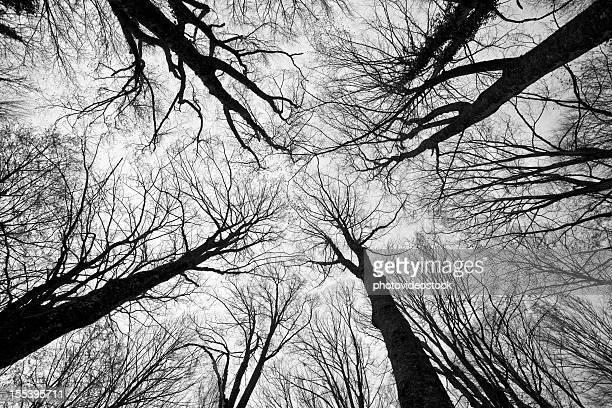 Scary Trees in Forest