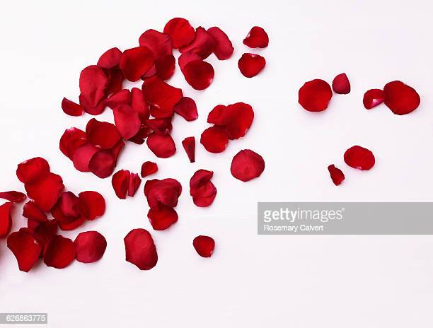 Scattered fragrant red rose petals on white.
