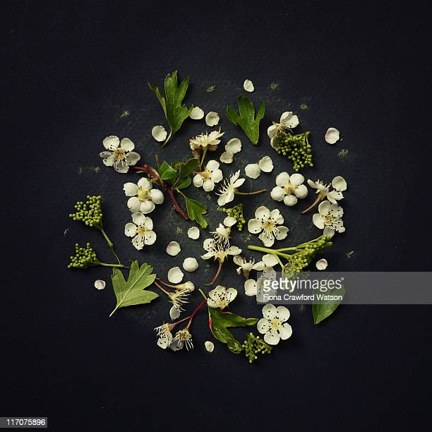 Scattered hawthorn flowers and leaves