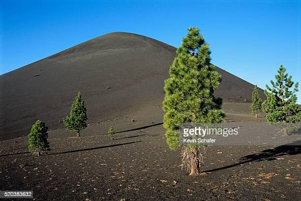 Scattered Ponderosa Pines Below Cinder Cone