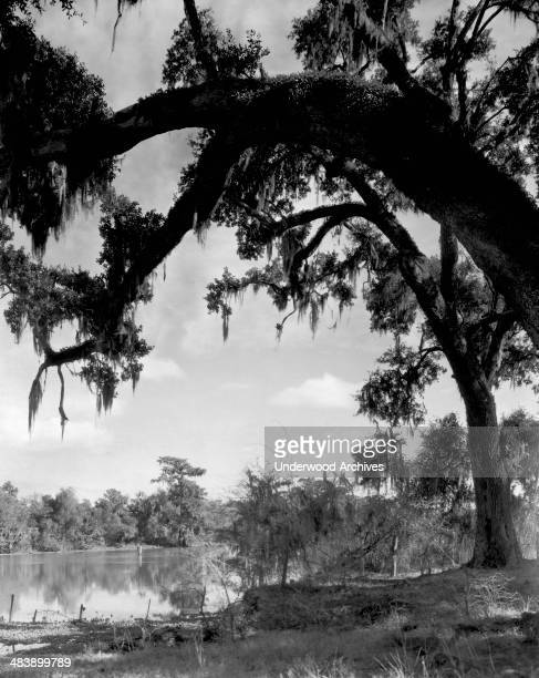 A scene along the shore Lake Charles Louisiana late 1910s or early 1920s