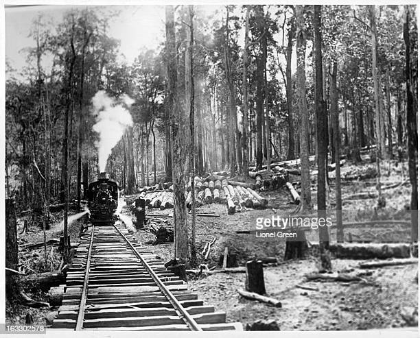 A scene of a train coming down the tracks passing a logging town in the Forest Of Camden Haven Australia 1955
