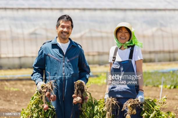 a scene of potato farm's work in japan - 農園 ストックフォトと画像