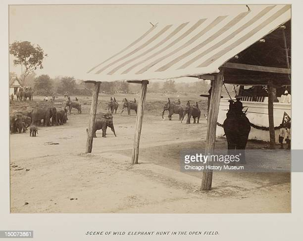 Scene of wild elephant hunt in the open field in Siam from photograph album 1893 From photograph album presented to Bertha Honore Palmer President of...
