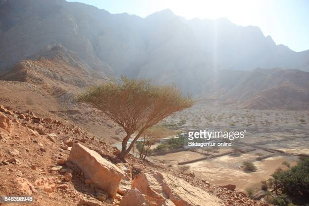 Scenery In The Bay of Bukha In The Granny's Niches Enclave of Musandam Oman