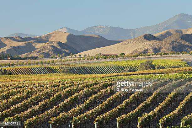 Scenery of a wine country with mountains far ahead