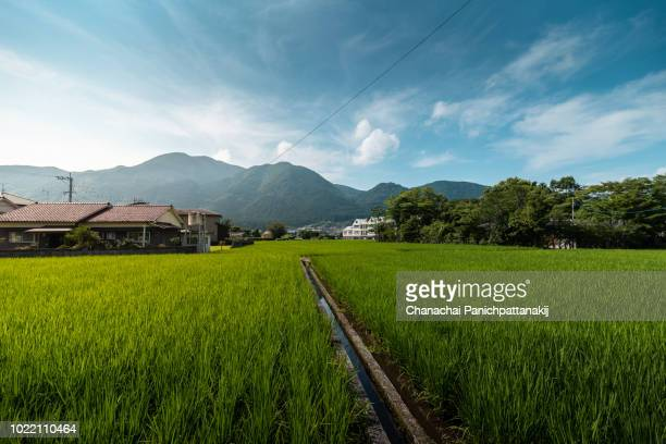 scenery of green rice field from yufuin town, ōita prefecture, kyushu, japan - non urban scene stock pictures, royalty-free photos & images