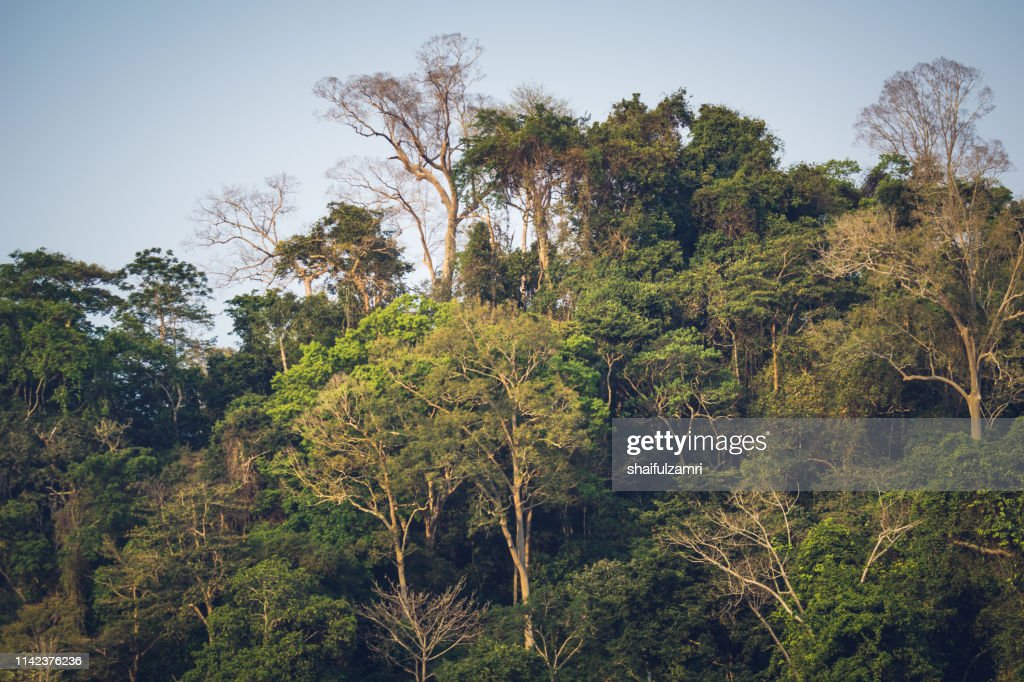 Scenery of the forest Taman Negara from the river Sungai Tembeling in Malaysia : Stock Photo
