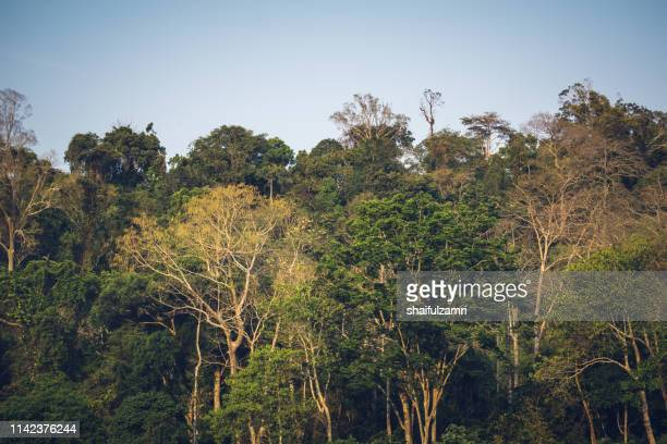 scenery of the forest taman negara from the river sungai tembeling in malaysia - taman negara national park stock photos and pictures
