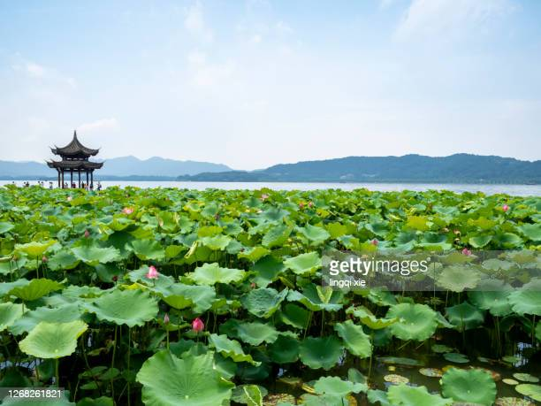 scenery of west lake in hangzhou, china with lotus - west lake hangzhou stock pictures, royalty-free photos & images