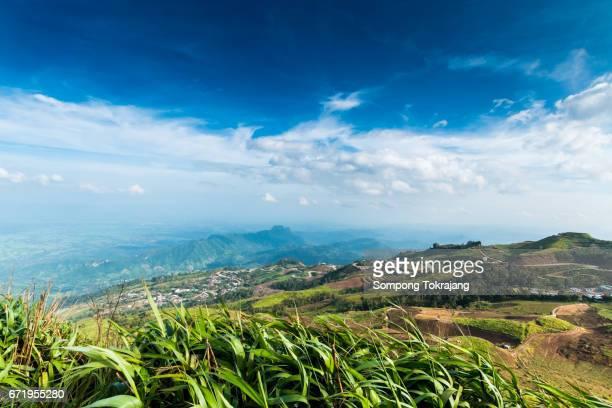 scenery on phu thap boek in thailand - boek imagens e fotografias de stock